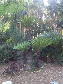 a trio of palms.