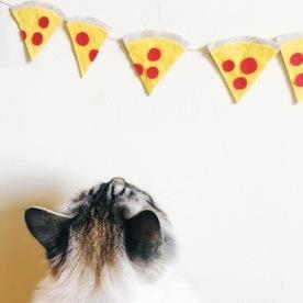 pizza fan.