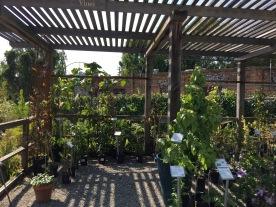 Trellis plants.