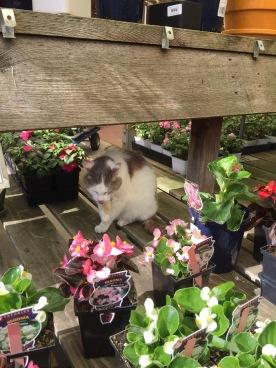 Garden kitty.